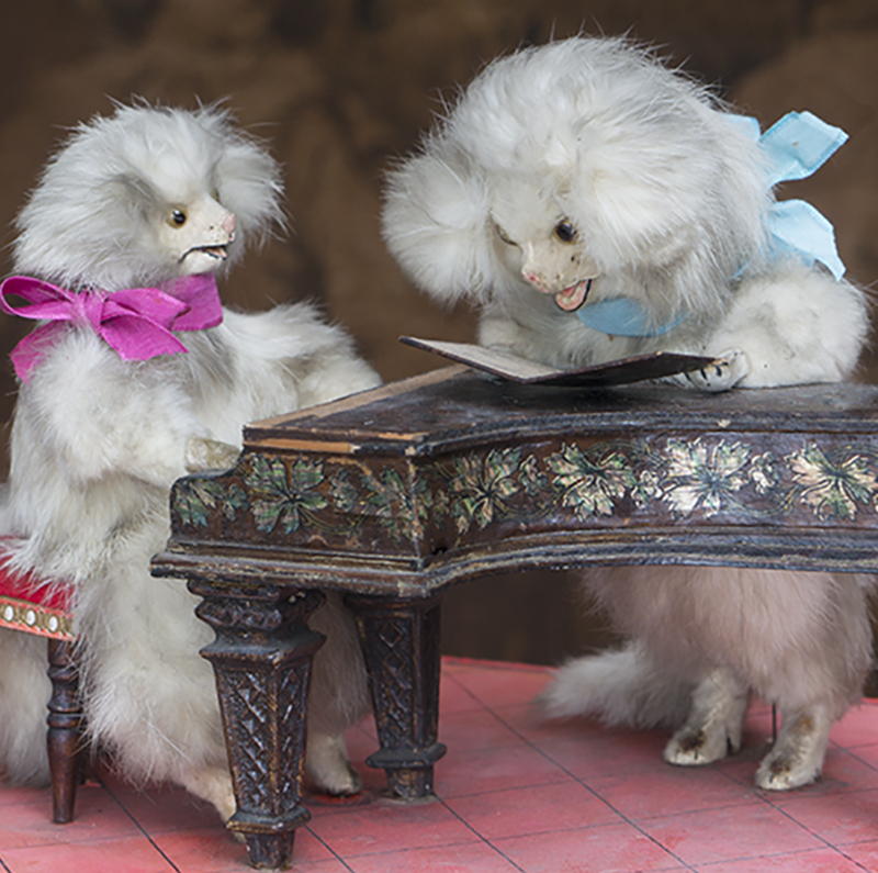 Automaton with two poodles